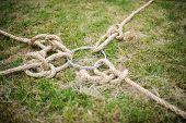 stock photo of tug-of-war  - team building rope game tug of war - JPG