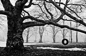 image of tire swing  - A tire swing hangs alone in the fog - JPG