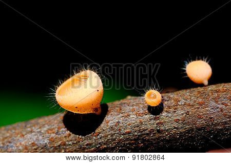Hairy mushroom on the timber log