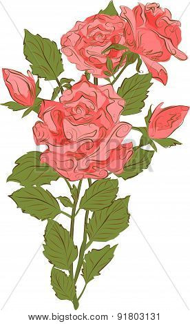 A bouquet of pink roses in vintage style. Vector illustration.