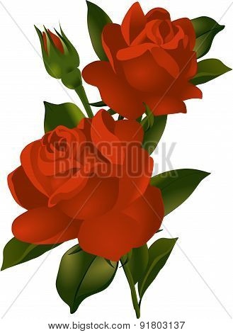 A bouquet of red roses . Vector illustration.