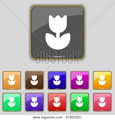 Flower, Rose Icon Sign. Set With Eleven Colored Buttons For Your Site. Vector