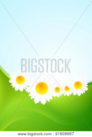 Summer background with green waves and camomiles. Vector design