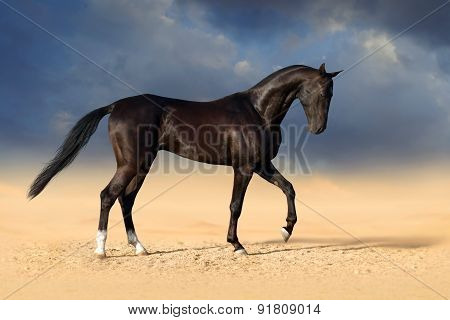 Black horse in desert sand