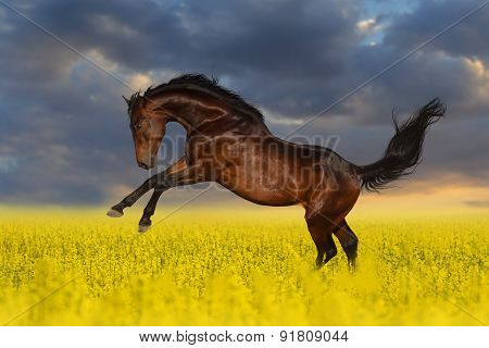 Bay stallion horse in flower meadow