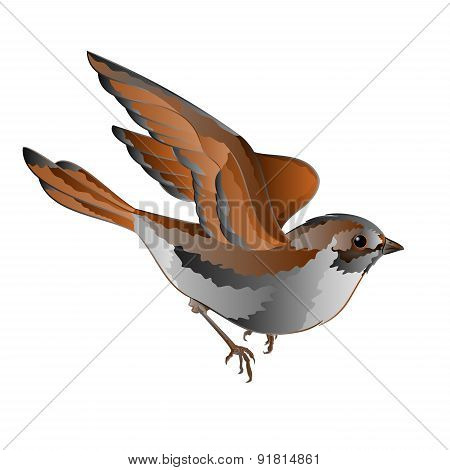 Little Bird Sparrow In Flight Vector