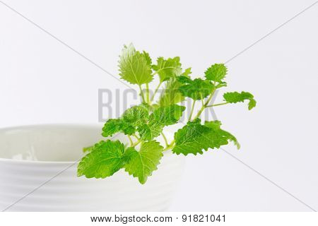 detail of fresh lemon balm on the bowl