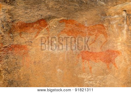Bushmen (san) rock painting of antelopes, Karoo region, South Africa