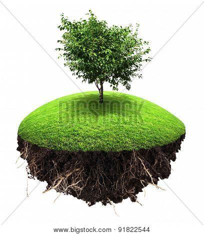 Island Tree Grass
