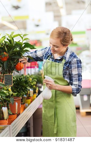 people, gardening and profession concept - happy woman or gardener taking care of mandarin tree in greenhouse