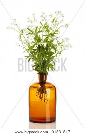 galium odoratum plants in old apothecary bottle isolated on white background