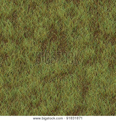 Grass Generated Seamless Texture