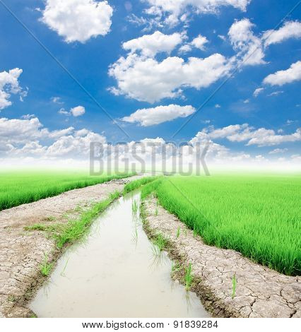 Trees With A Ditch Of Water Use In Rice.