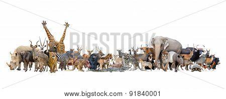 Animal Of The World