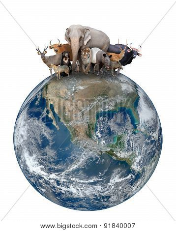 Group Of Asia Animal With Planet Earth