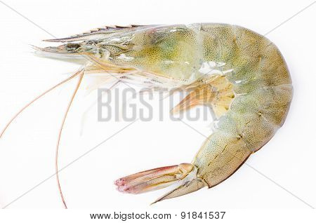 Close Up Banana Prawn Or Shrimp