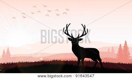 Silhouette a deer