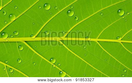 Water Drop On  Leaf Texture