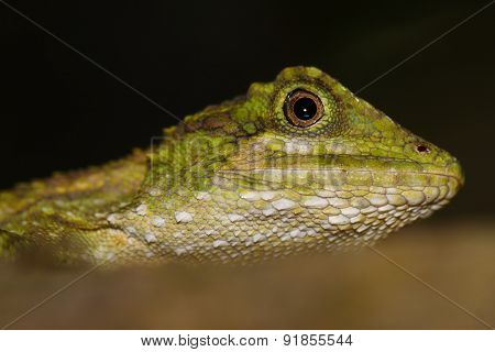 Small lizard, reptile in the wood