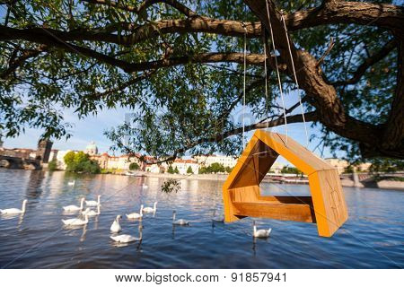 Birdhouse hanging from tree over river