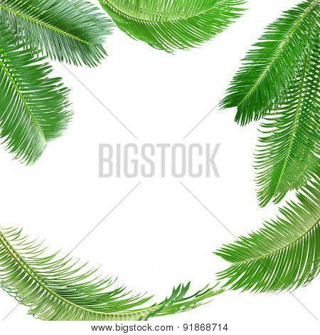 Frame of green palm leaves isolated on white