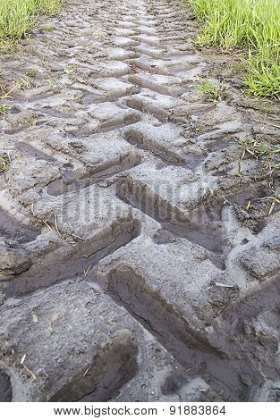Tractor Track In Mud