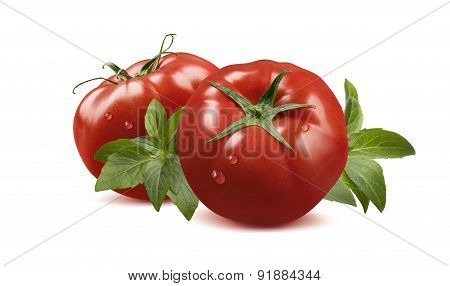 Whole Tomatoes In Water Drops And Basil Isolated On White