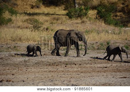 Elephants walking in a river bed