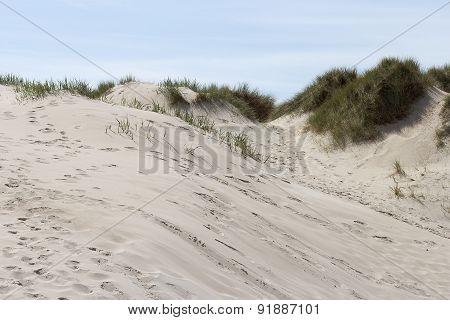 Sand a grass