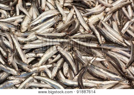Fresh catched anchovies