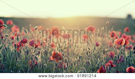 Poppy field - retro styled background