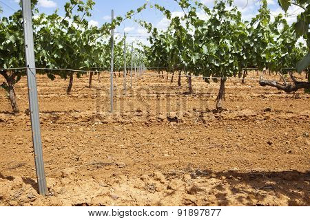 Vineyard Metal Poles And Wire