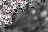 pic of vulva  - Hawthorn flower with bokeh in a british garden - JPG