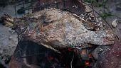 foto of snakehead  - Salt burning Tilapia on charcoal stove  - JPG
