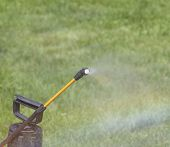 foto of pesticide  - Device of spraying pesticide at the sunshine produces a rainbow over green grass - JPG