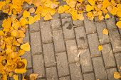 image of cobblestone  - Autumn leaves scattered on a cobblestone street - JPG