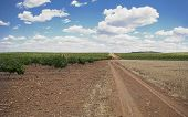 pic of tierra  - Grain fields and vines plantation at Tierra de Barros Region with its unique red soil Extremadura Spain - JPG