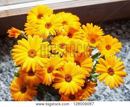 Yellow gerbera in a bunch horizontal image