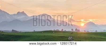 Landscape Panorama With Cows
