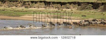 Wildebeest and zebra crossing the river in the Serengeti, Tanzania, Africa