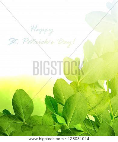 leaf clover on white background. holiday. trefoil