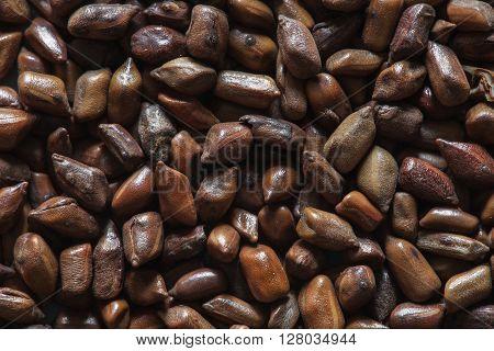 cassia tora beans, chinese coffee beans macro