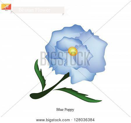 Bhutan Flower Illustration of Blue Poppy Himalayan Poppy or Meconopsis Sheldonnii Flower. The National Flower in Bhutan.