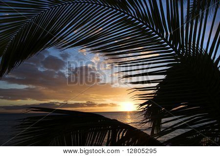 Sunset sky framed by palm fronds over the Pacific Ocean in Kihei, Maui, Hawaii, USA.