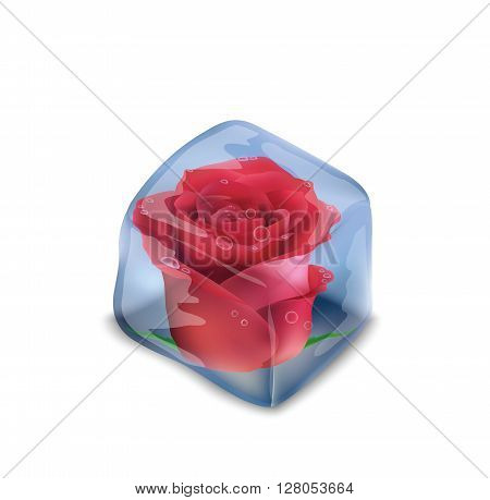Frozen rose in an ice cube, beautiful background