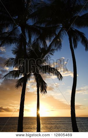 Sunset sky framed by palm trees over the Pacific Ocean in Kihei, Maui, Hawaii, USA.