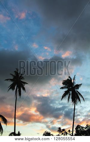 Silhouettes of palm trees at sunset sky, palm trees on a tropical island, tropical garden background, colorful sunset, palm trees and skies on fire, sunset clouds, summer vacation in Philippines