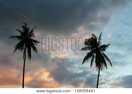 Silhouettes of palm trees on a tropical island, palm trees on a background, 