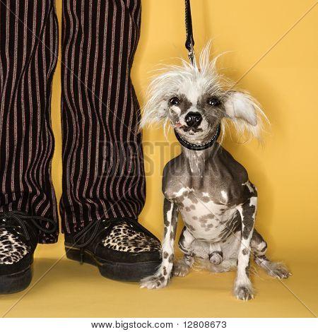 Chinese Crested Dog auf Leine stand neben Mannes Beine.