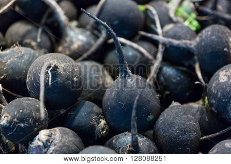 A close-up shot of a bunch of black radishes